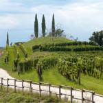 Vigne Museum_Luigi Vitale_per newsletter